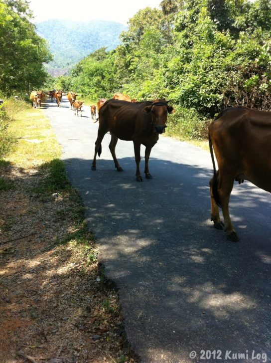 道の牛さん