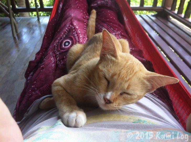 ハンモックの上で這い寄るネコさん