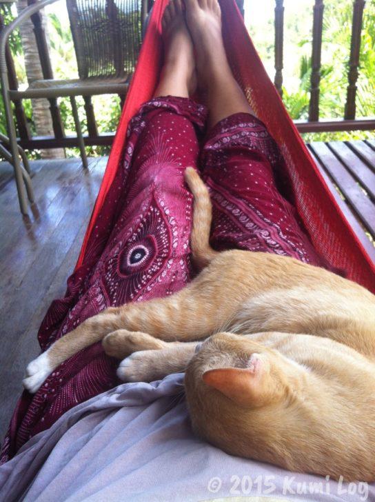 私の胸で眠るネコさん