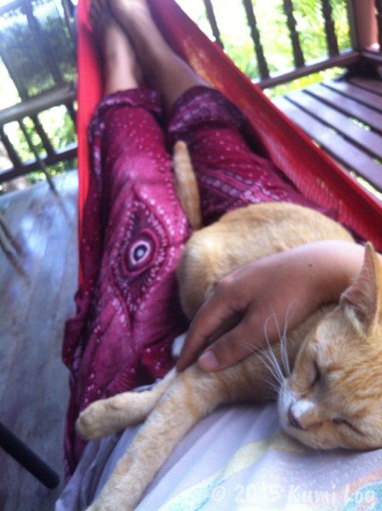私の胸の上で抱かれるネコさん