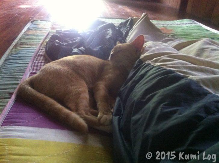 寄り添って眠るネコさん