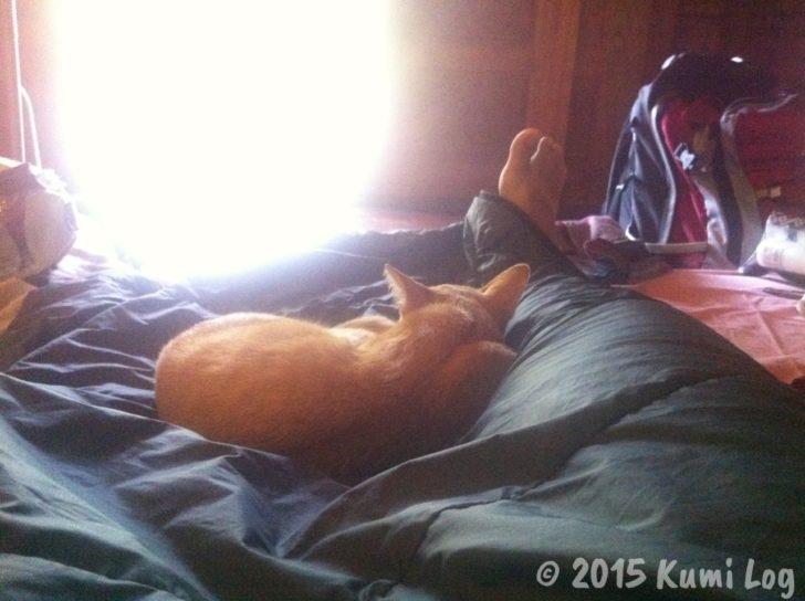 足と足の間のくぼみにハマるお猫さま