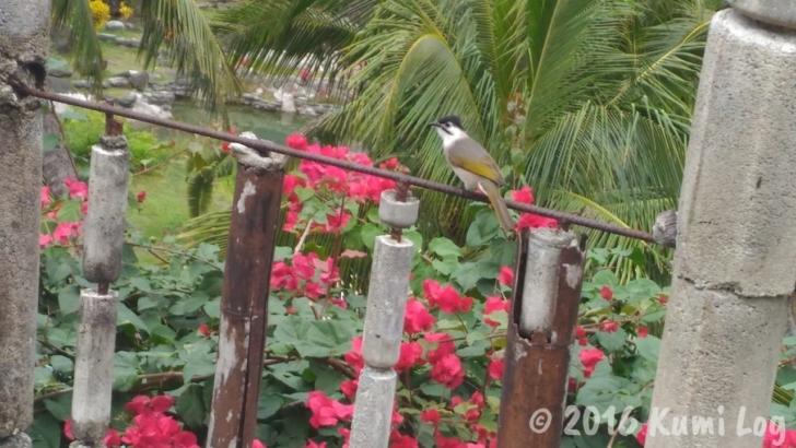 ㄚーㄚ旺温泉渡假村の鳥さん