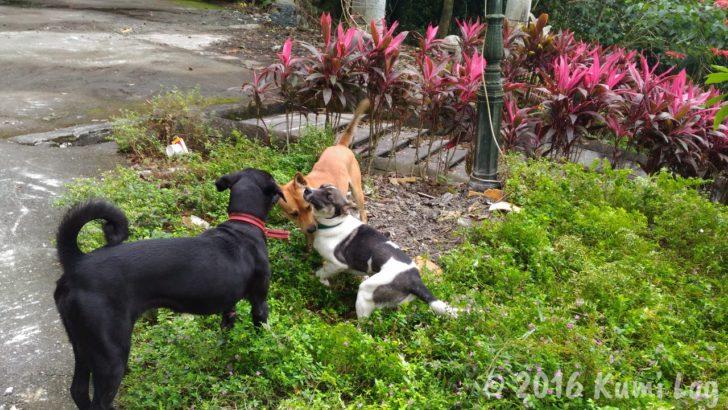 外で遊ぶ瑞穂温泉の犬さんたち