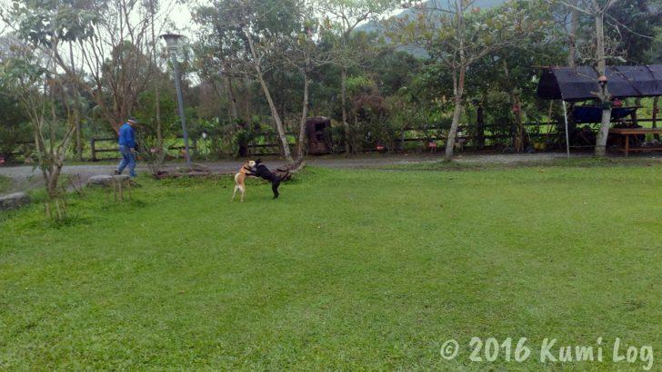 剣柔山荘の庭で遊ぶ犬たち