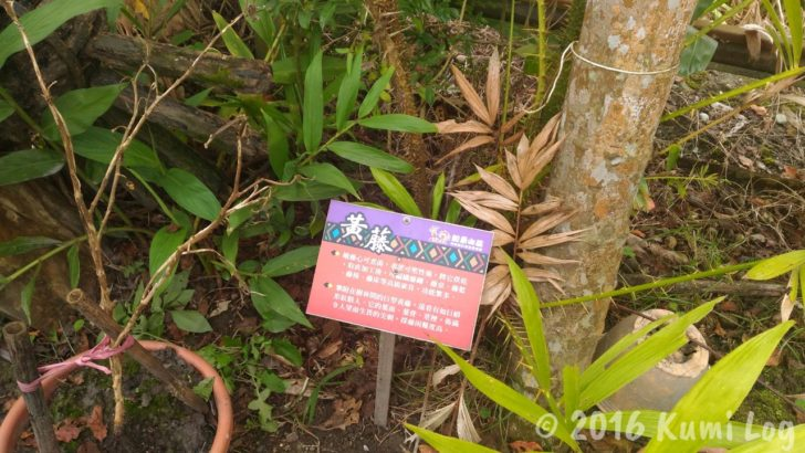 剣柔山荘の庭の植物にある説明書き