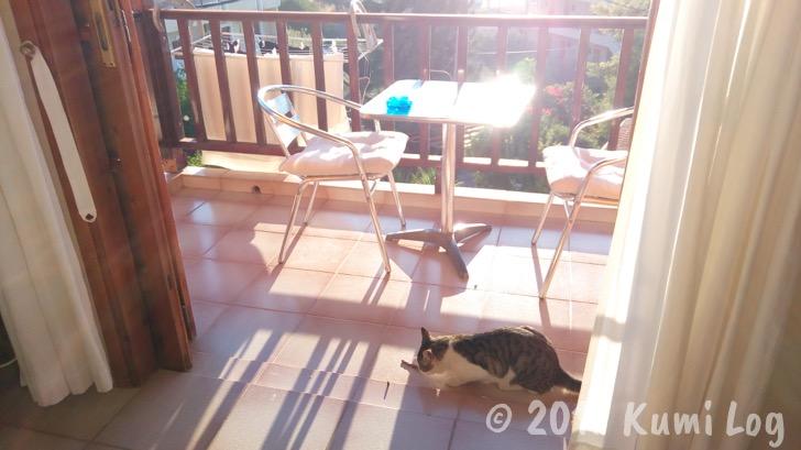 ベランダに居るネコさん