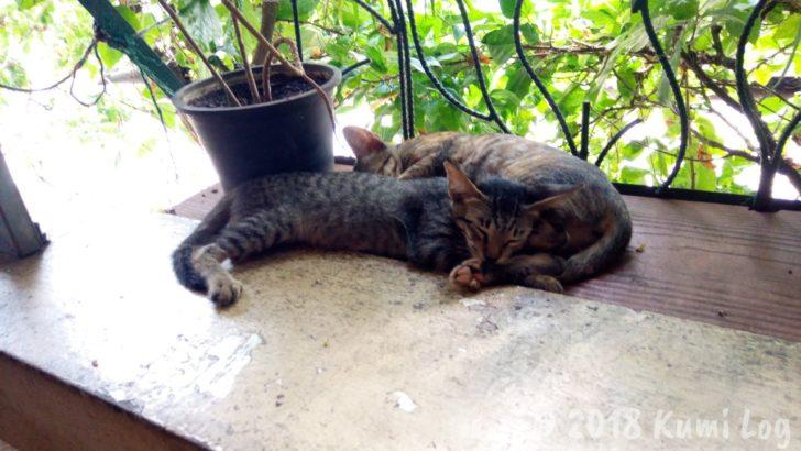 Le Vendome ネコさん