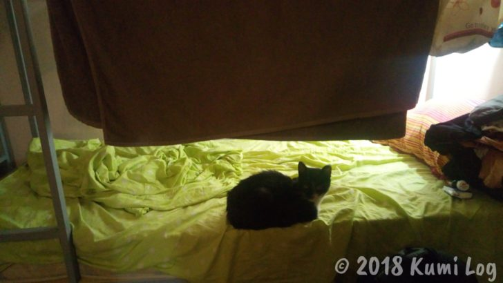 トビリシのネコさん