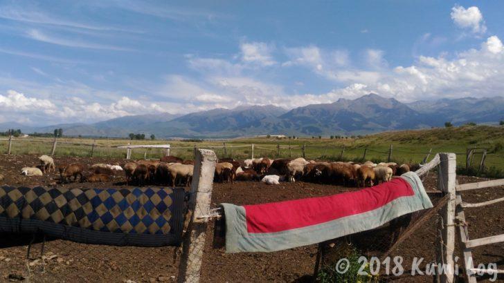 キルギス・カラコルの草原と羊