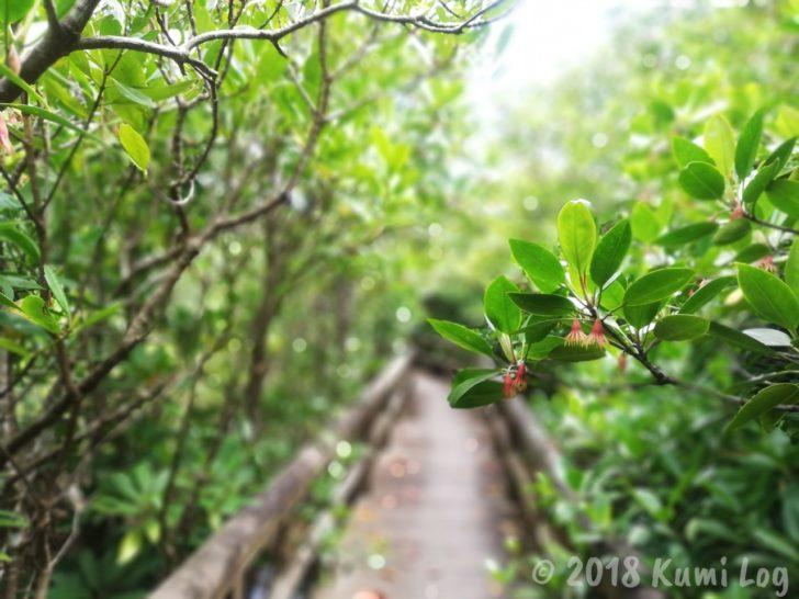 HUAWEI P20 Liteで撮った写真(沖縄)