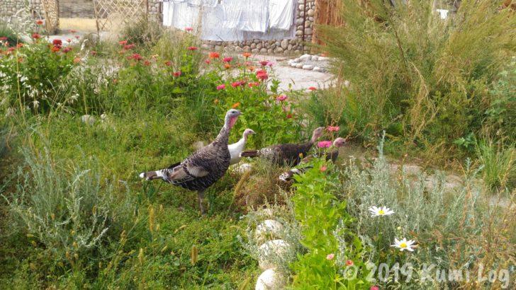 ベルタム・ユルタキャンプ内の鳥さんたち