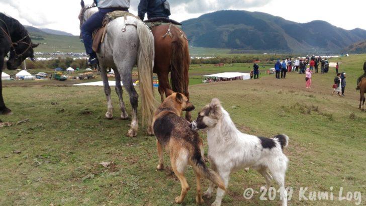 キルギス・メスの犬とオスの犬