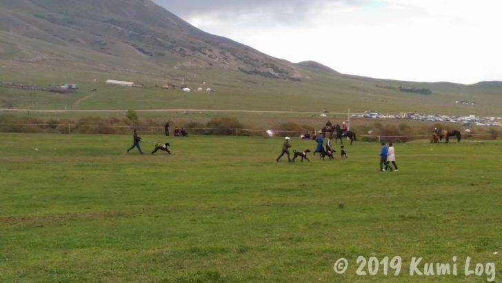キルギス・ワールドノマドゲーム、ドッグレース