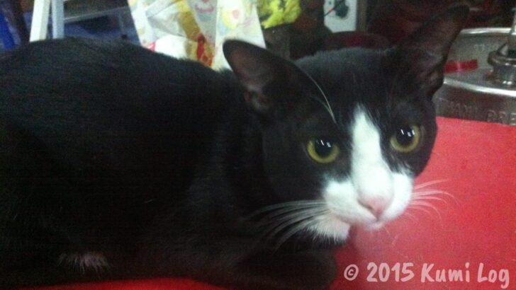 ラーブウボンの猫ちゃん